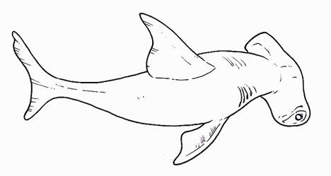 La visin de los tiburones martillo es de 360 grados  Mentes Curiosas