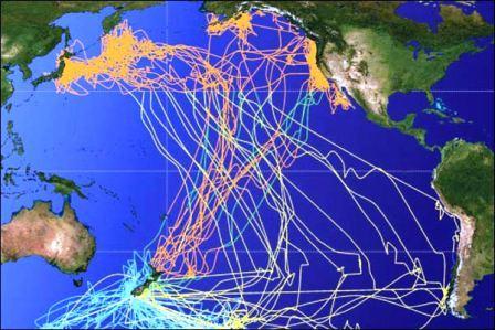 rutas_aves_migratorias