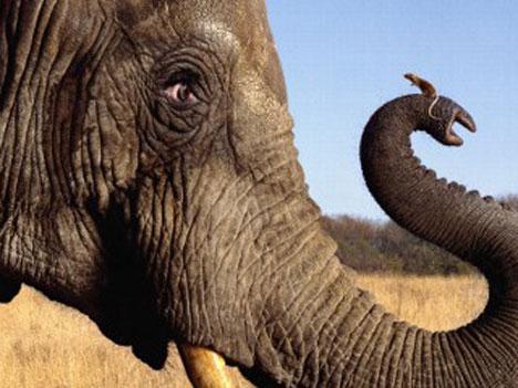 elefante_vs_raton