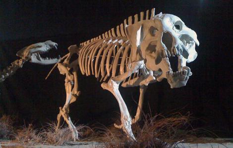 Prehistoric Predators II:  Entelodont NGCUS  - Ep Code: 3885