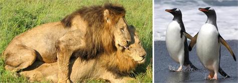 animales homosexuales(1)