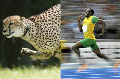 guepardo usain bolt(1)