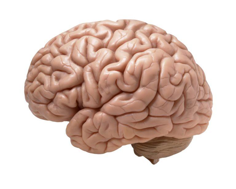 Cerebros conectados por Internet