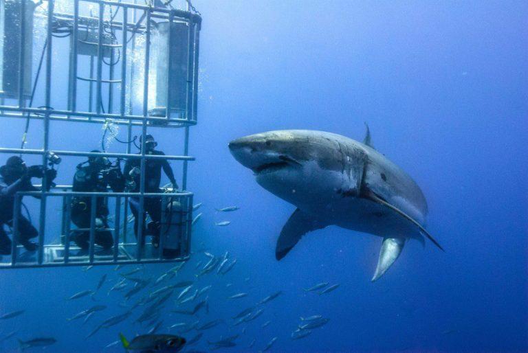 """Diseñan un traje para ser """"invisibles"""" a los tiburones"""