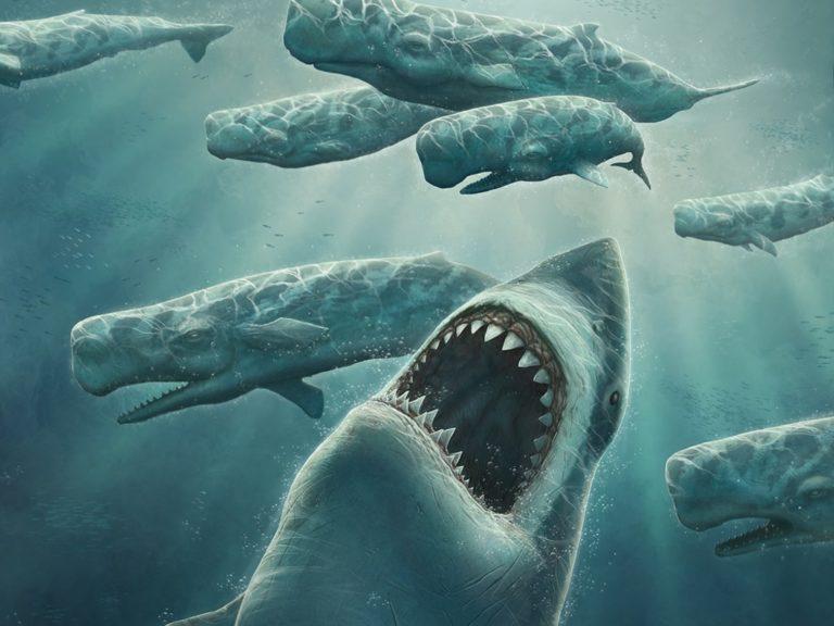 El megalodón, el tiburón más grande de la historia