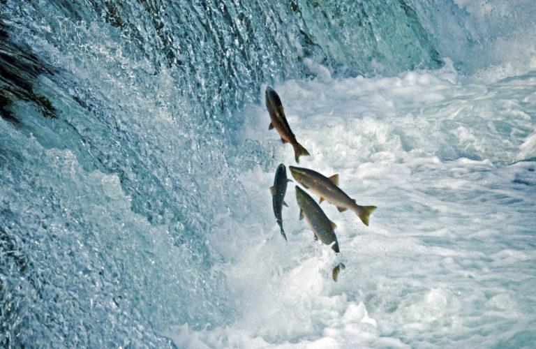 Especies marinas migran a los polos por el calentamiento