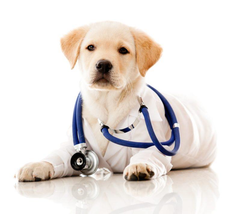 Perros para detectar el cáncer de ovarios