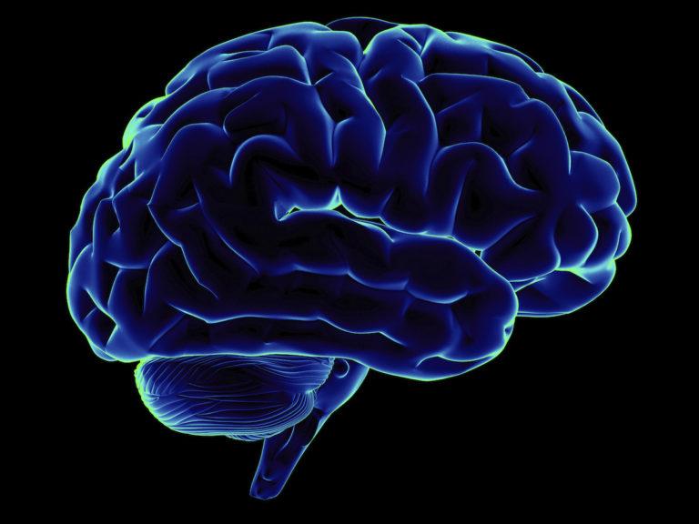 Qué porcentaje utilizamos de nuestro cerebro