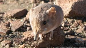 Las nuevas especies animales descubiertas en 2014 1