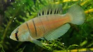 Las nuevas especies animales descubiertas en 2014 2