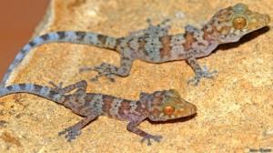 Las nuevas especies animales descubiertas en 2014 3