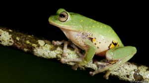 Las nuevas especies animales descubiertas en 2014 4