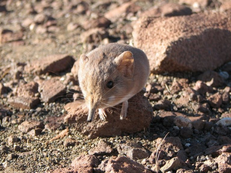 Las nuevas especies animales descubiertas en 2014